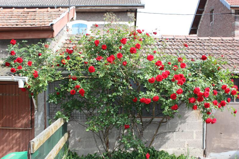 Dombasle sur meurthe superbe maison de cit sans travaux for Central jardin rosiere